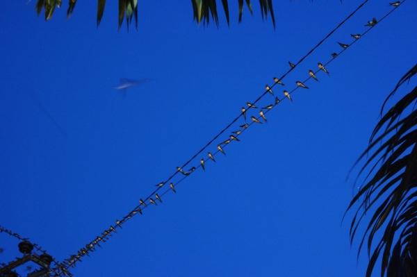 Burung layang-layang