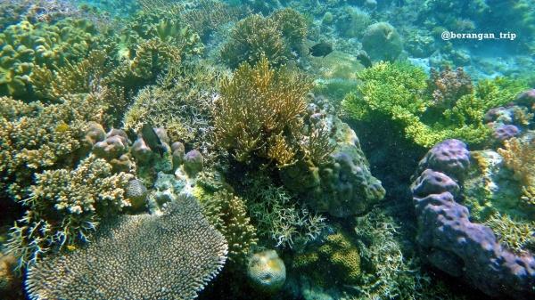 coral warna warni Pulau Bidadari, Flores. Pic by intaninchan