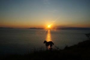 anjing penjaga pulau kanawa. Pic by beachesandbackpacks