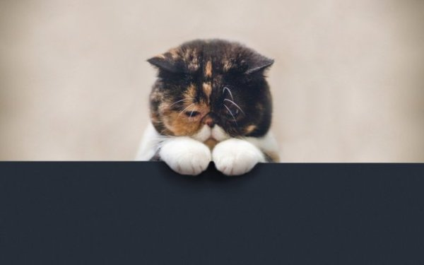 5673_Beautiful-big-fluffy-animal-sad-cat